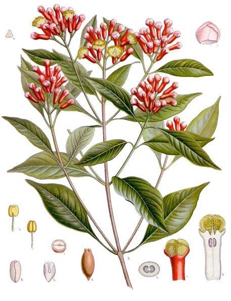 condimento di chiodi di garofano