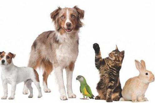 antibiotici per animali