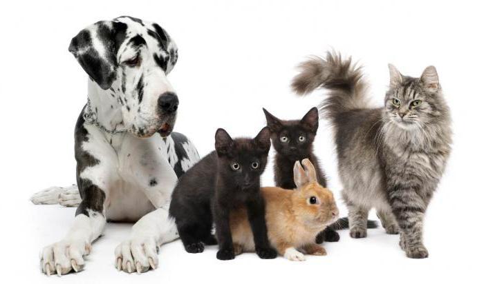 cobactan per cani