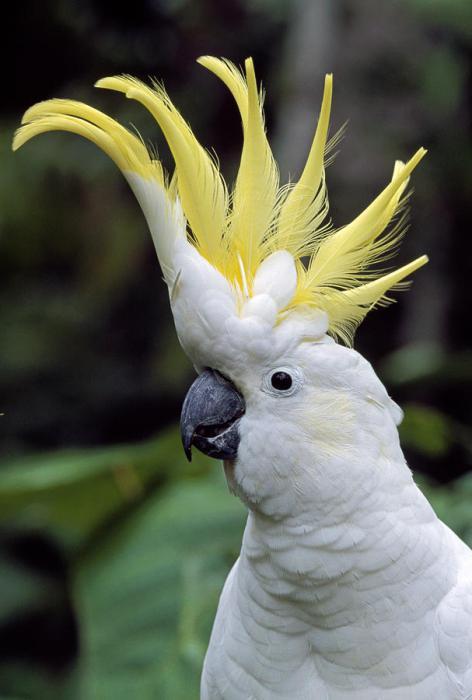 papagaj.  t