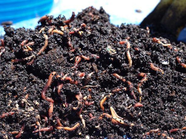 Kava kao gnojivo za biljke