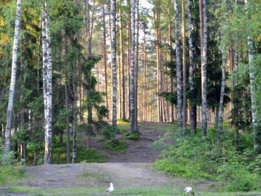 Lago Mednoe, regione di Leningrado