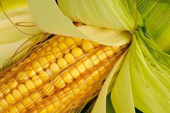 ползи и вреди от царевица