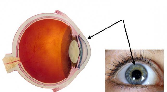 Oči rožnice