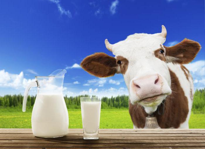 composizione proteica del latte vaccino