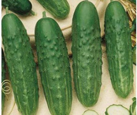 recensioni di cetriolo fenice