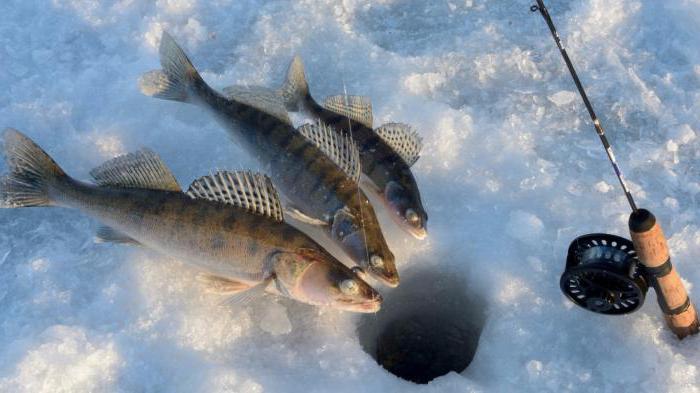 риболов на сјеници Калиновка