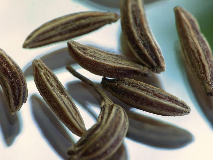 Плодовете на обикновения кимион