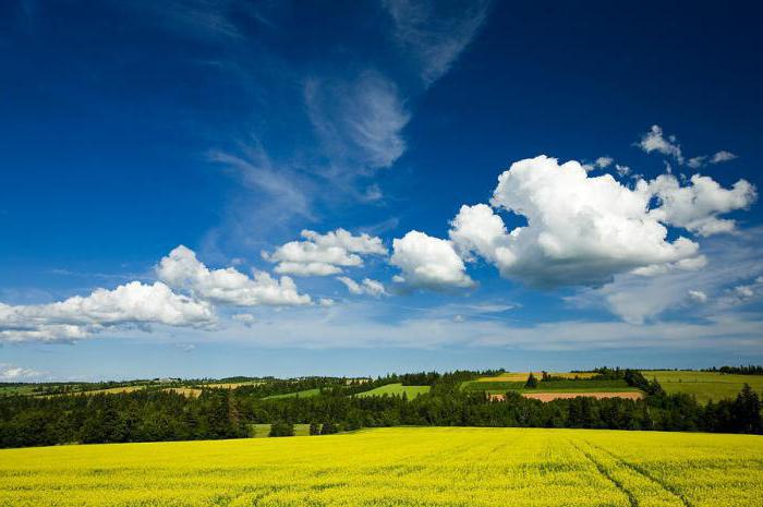 kumulusni oblaki