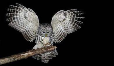 cosa stai mangiando l'uccello notturno