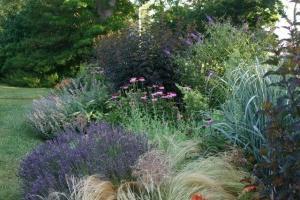 Okrasne grmovnice za vrt