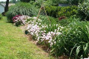 okrasne grmovnice za poletno kočo