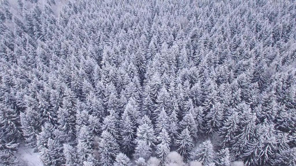 Zima w głębokim lesie