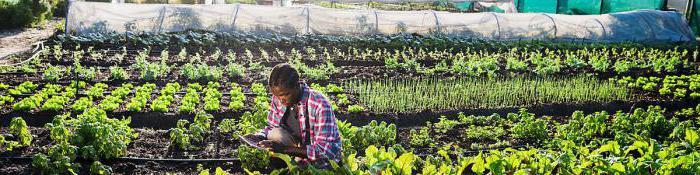 економски развијеним развијеним и земљама у развоју