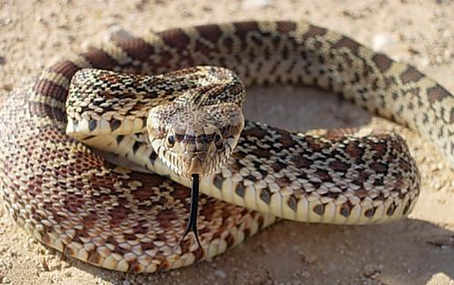 in un sogno il serpente morse