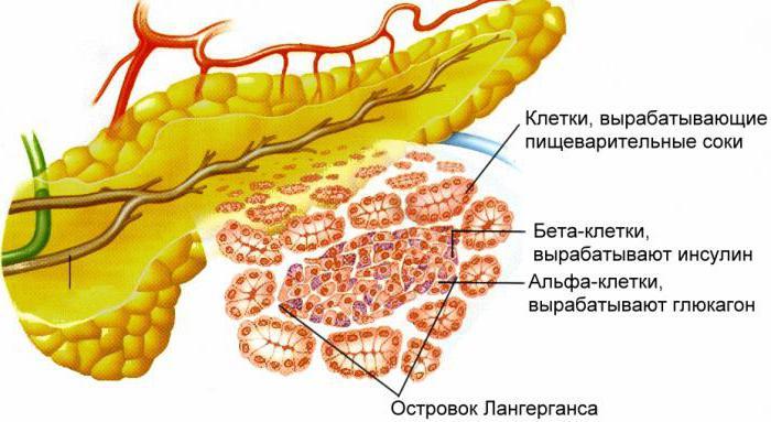 човешки храносмилателни жлези
