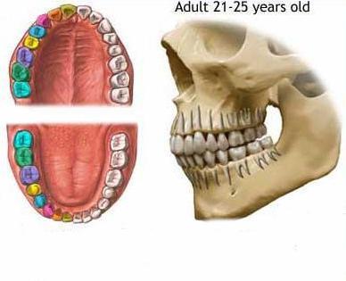 ludzkie narządy trawienne
