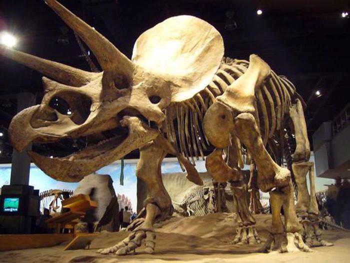 скелети на динозаври
