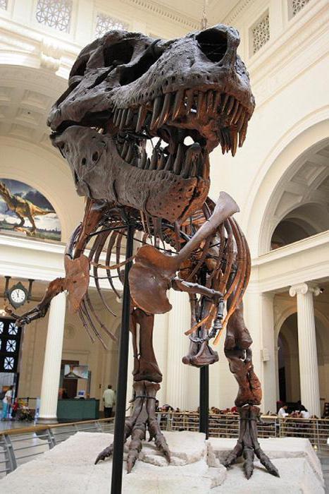 какви скелети на динозаври