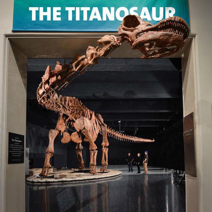 скелет на динозавър в музей
