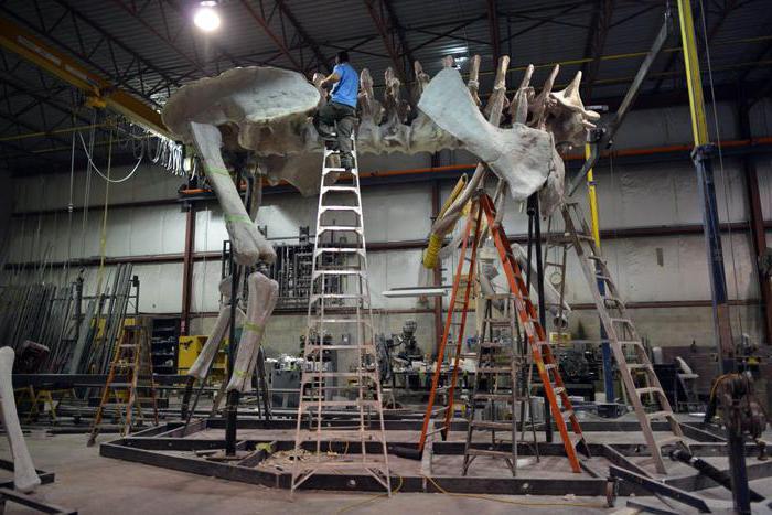 намерен скелет на динозавър