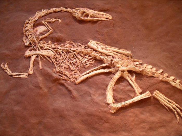 модели на скелета на динозаври
