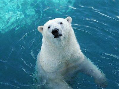dove vivono gli orsi polari