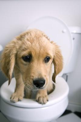 како лечити дијареју код пса