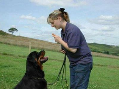 addestramento del cane a casa