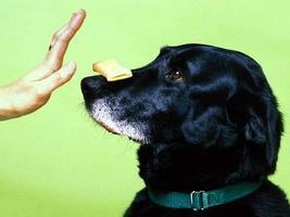 come addestrare un cane a casa