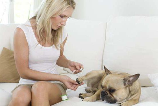 pas povraća uzroke bijele pjene