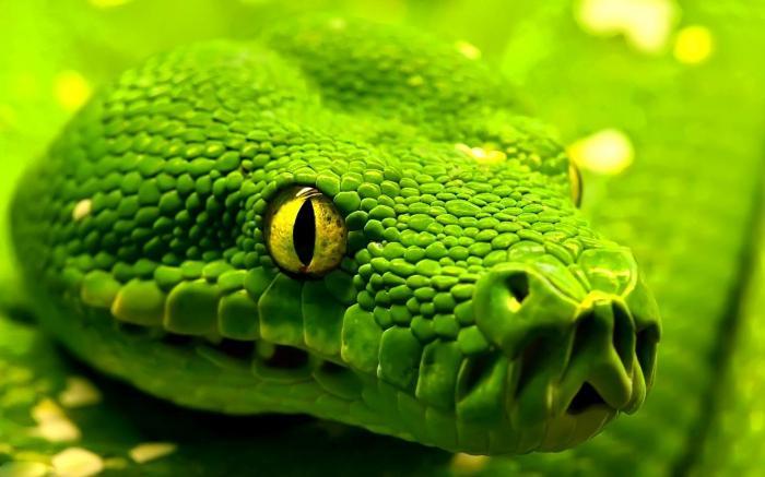 sognato un serpente