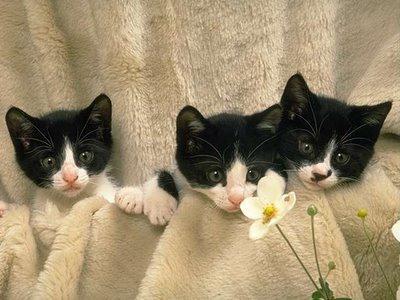 Dormire gatto con gattini