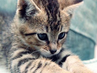 Sognando molto gattini