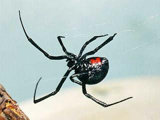 интерпретација снова интерпретација снова паук