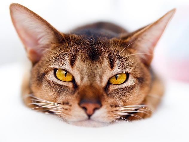ciò che i gatti sognano