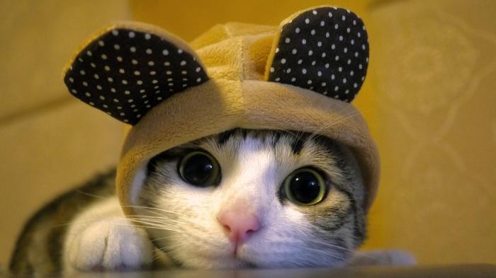 gatto dei sogni gatto nero