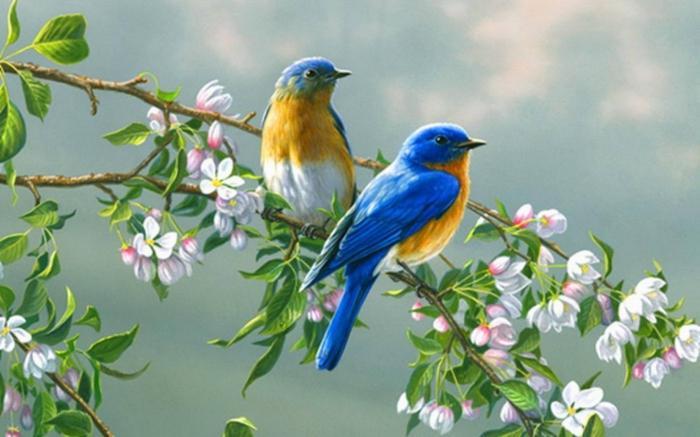 о чему птице сањају