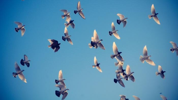 сањају да виде птицу