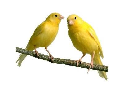 сан птица
