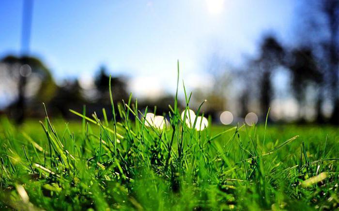 perché sognare di erba verde