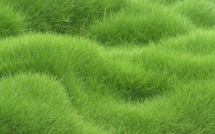 che sogni di erba verde falciata