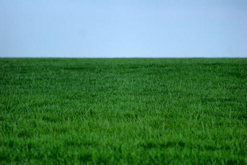 che sogni di erba verde in inverno