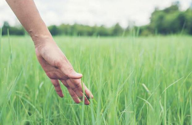 perché sognare di erba verde alta