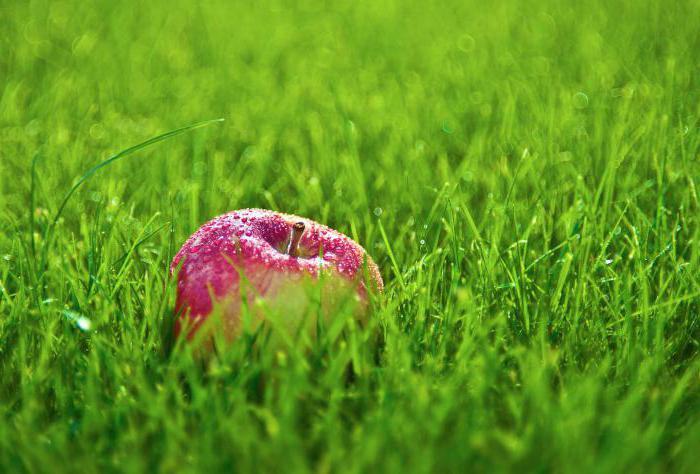 libro dei sogni perché sognare l'erba verde