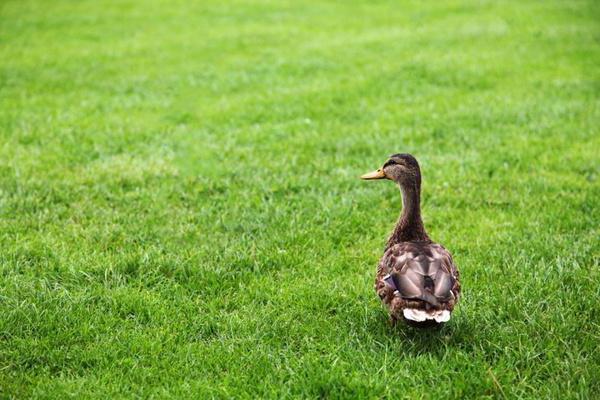 che sogni di erba verde nel cortile
