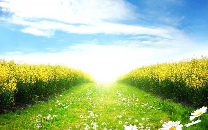 поље поља цвећа снова