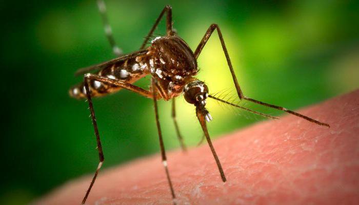зашто сан комарац