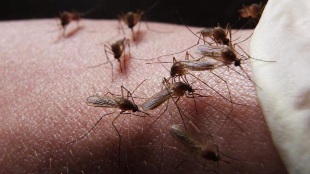 зашто сањате велике комарце