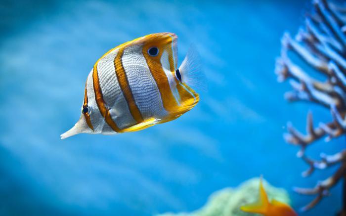 tetra cibo per pesci